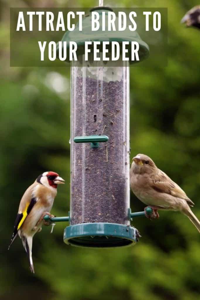 bird feeder attracts birds