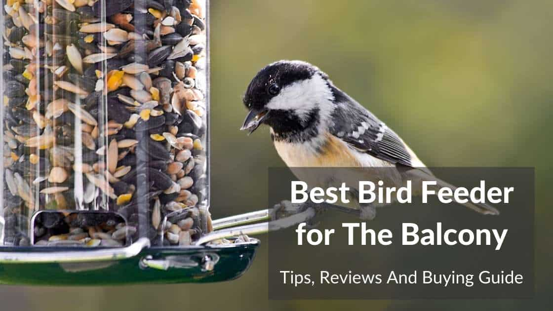 best bird feeder for balcony