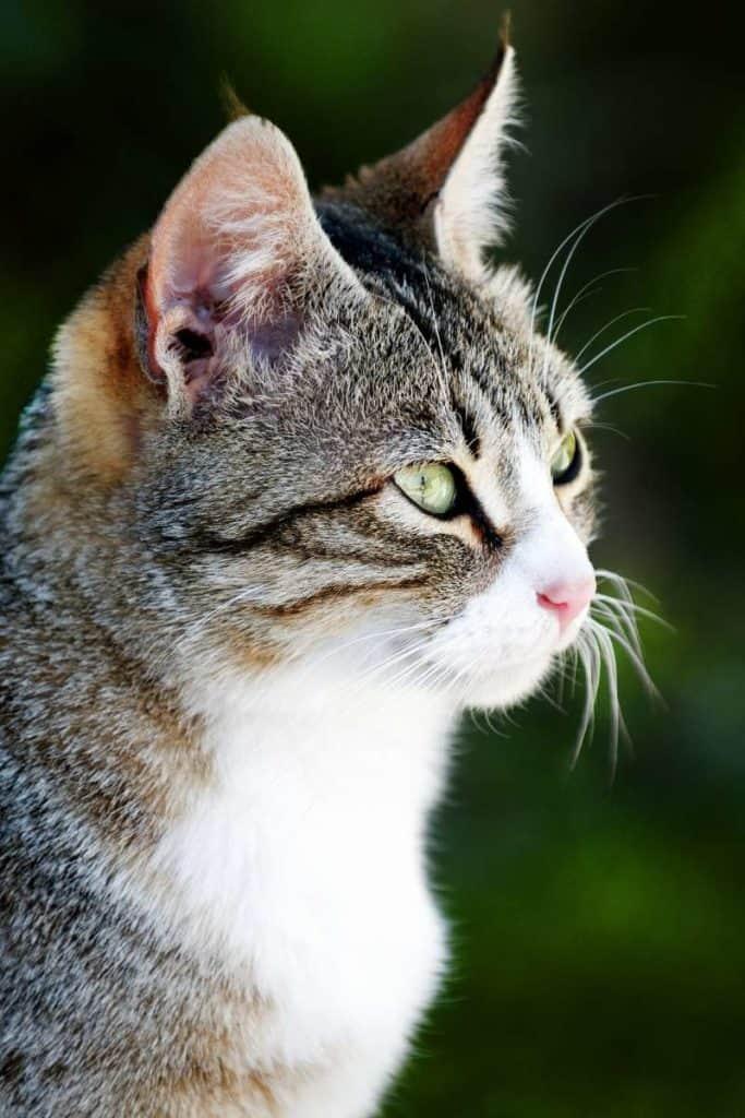 cat freedom