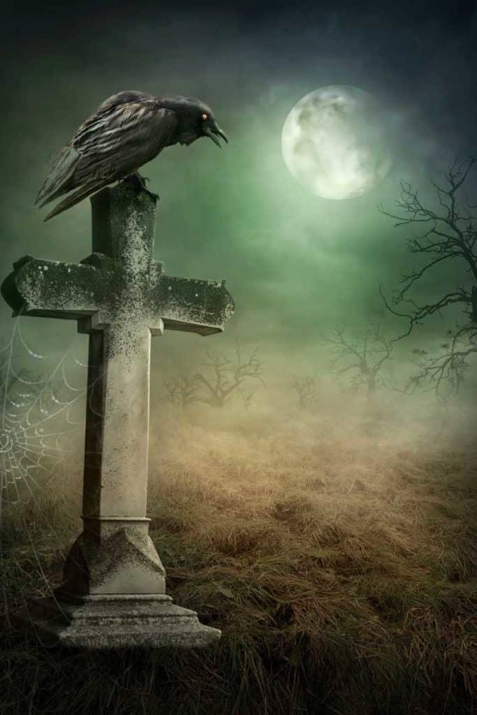 dead crow message