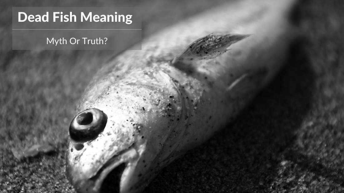 dead fish meaning