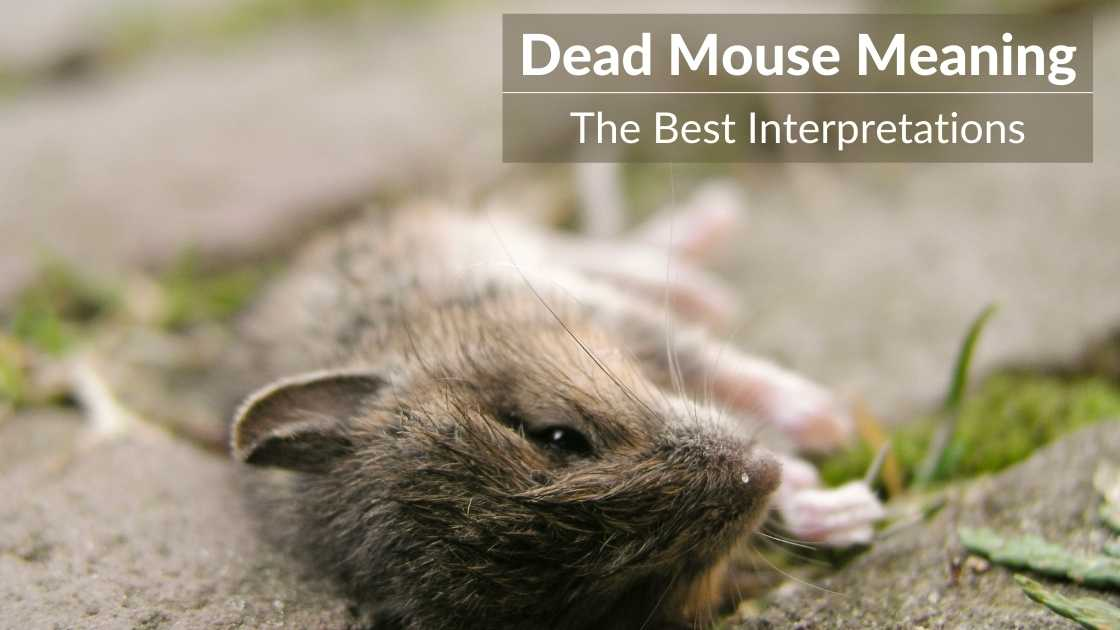 dead mouse meaning