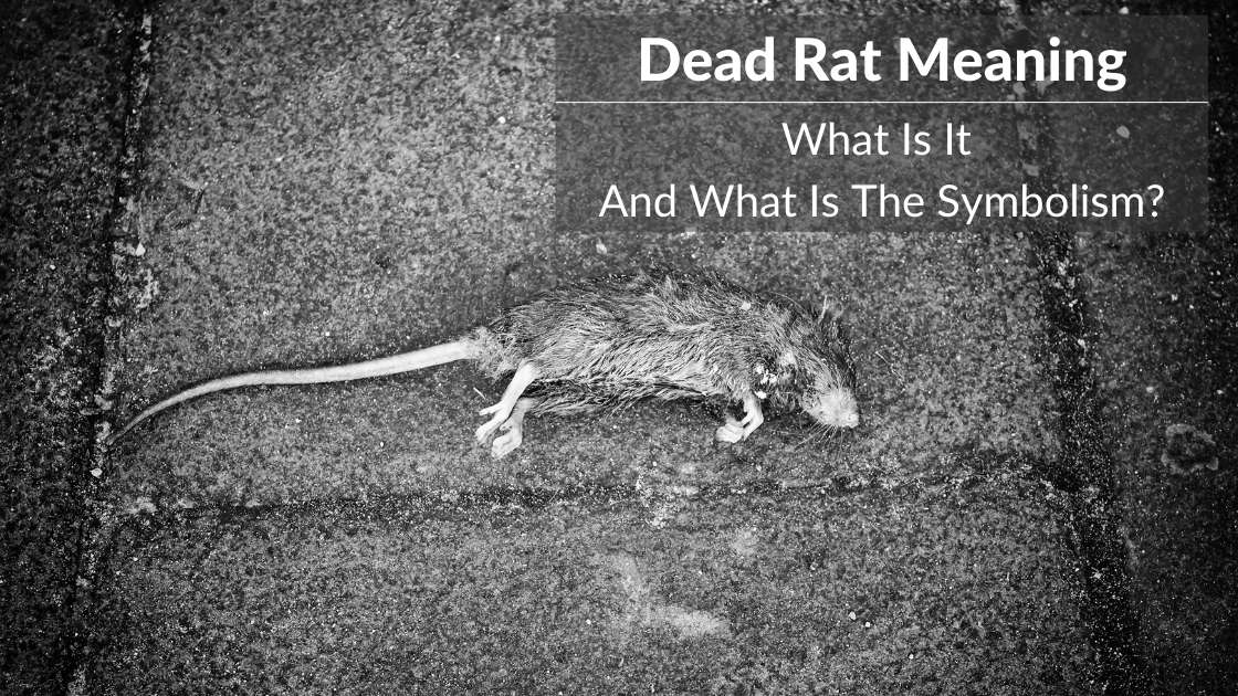 dead rat meaning