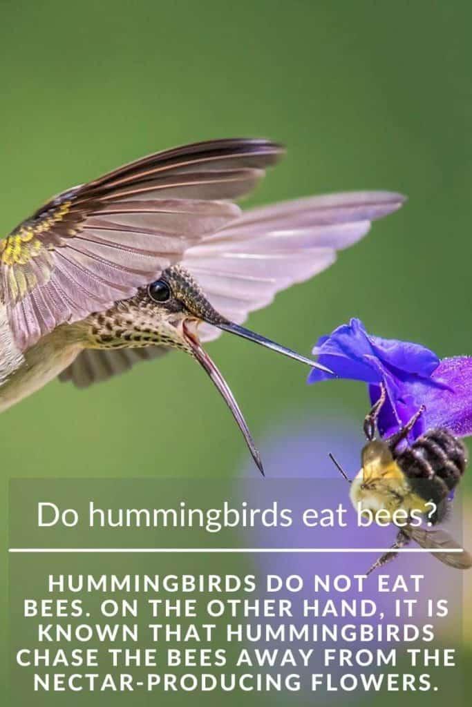 hummingbird eat bees