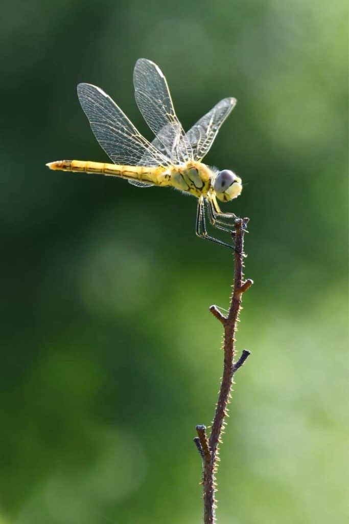 dragonfly is free