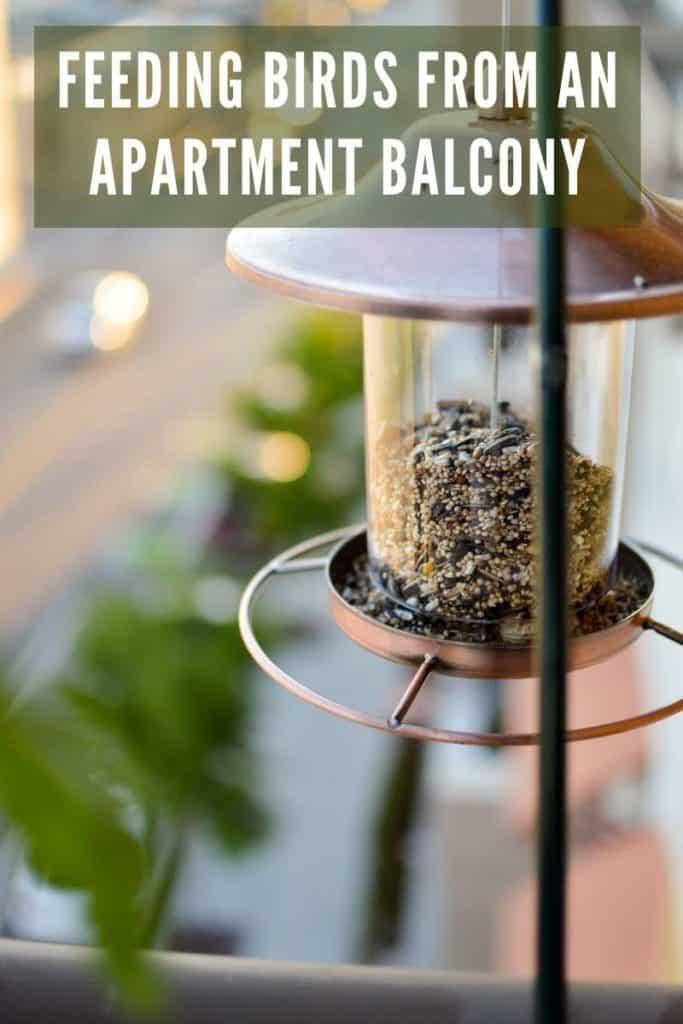 feeding birds from balcony