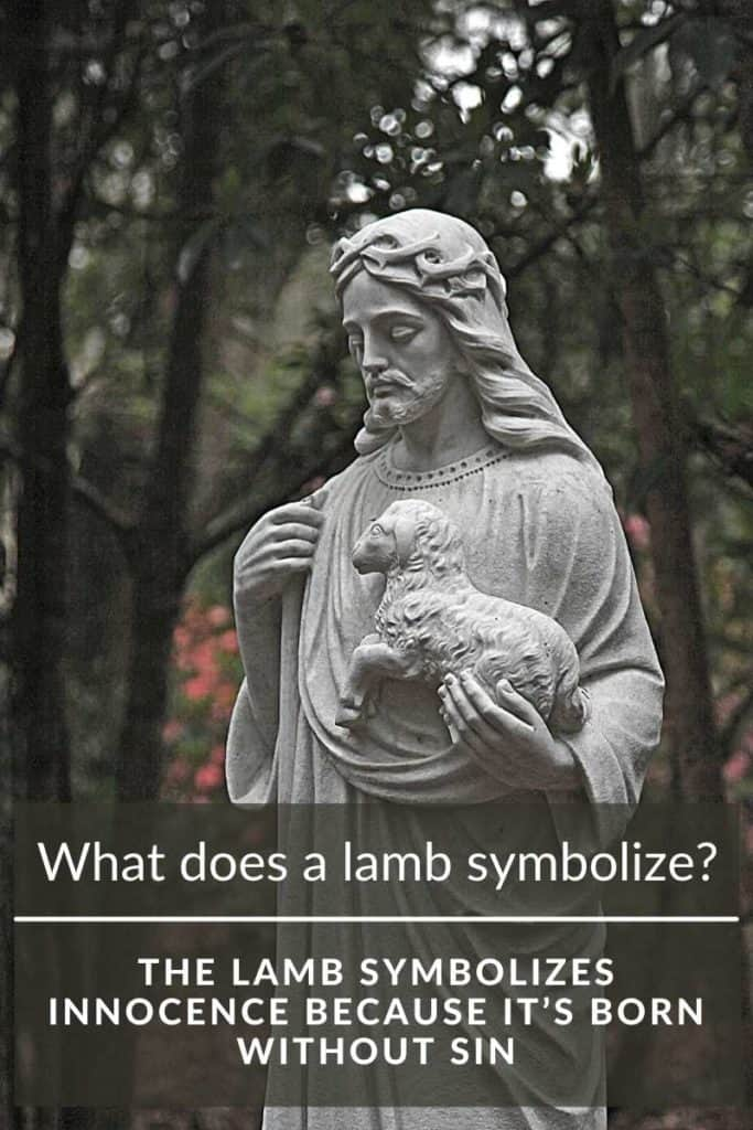 lamb innocent