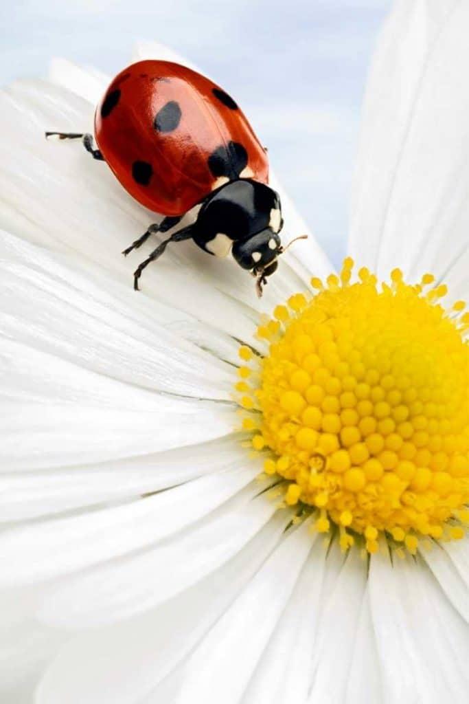 omen behind dead ladybug