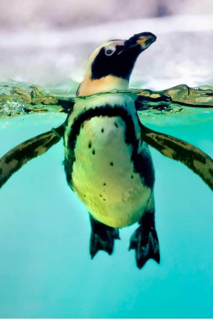 penguin animal totem