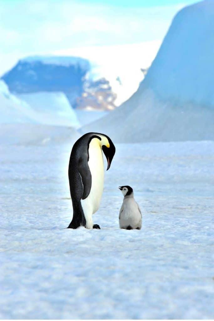 penguin symbolic meaning