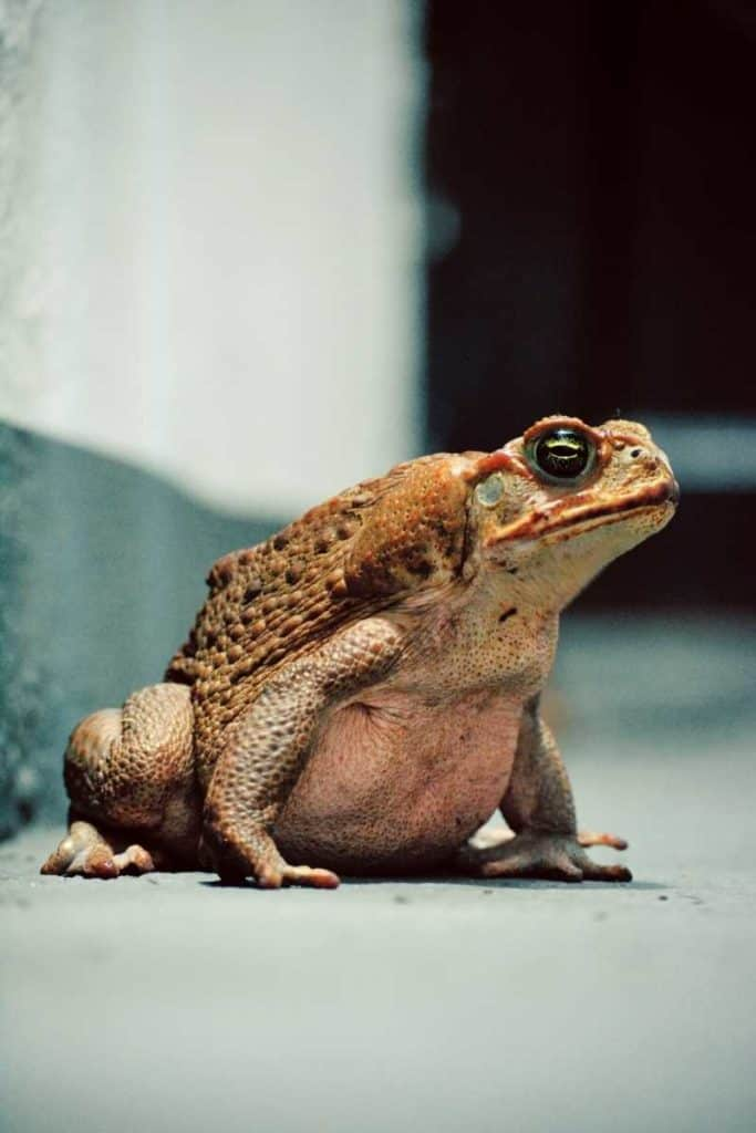 toad Christianity