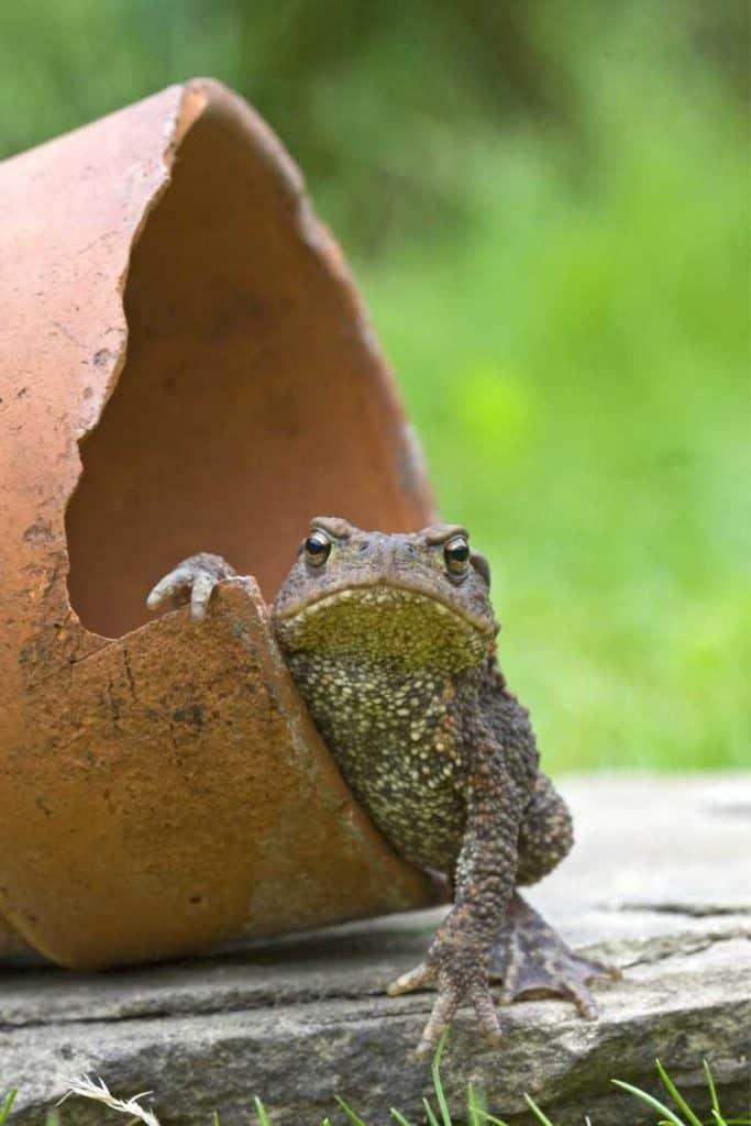 toad in dreams
