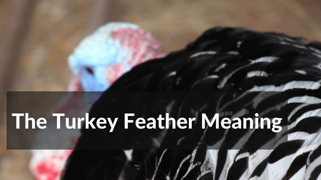 turkey feather meaning