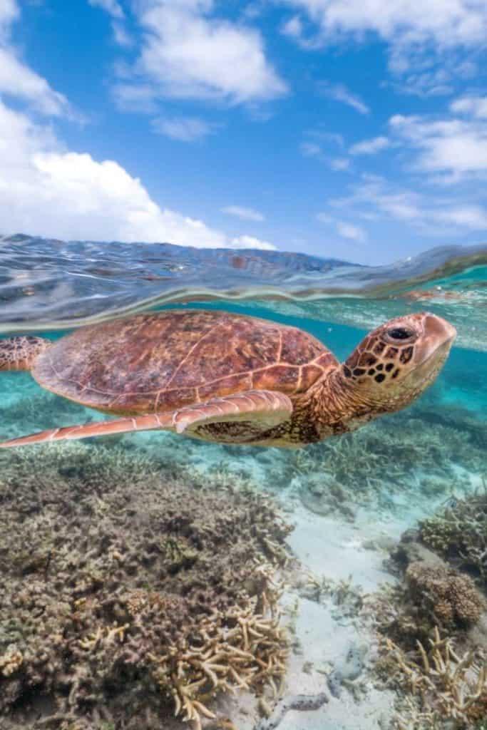 turtle representing peace