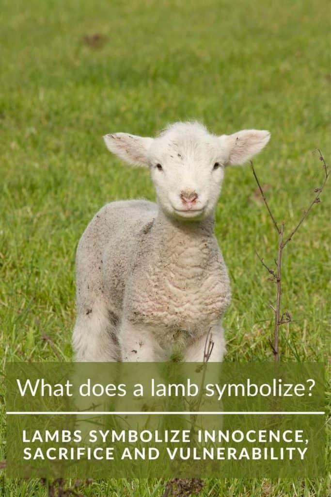 what does lamb symbolize