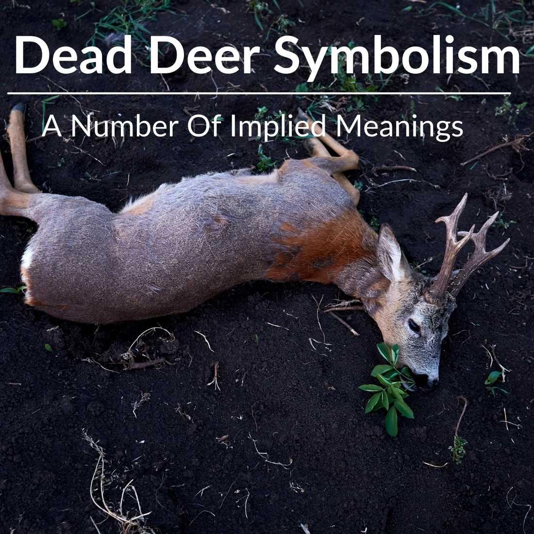 Dead Deer Symbolism