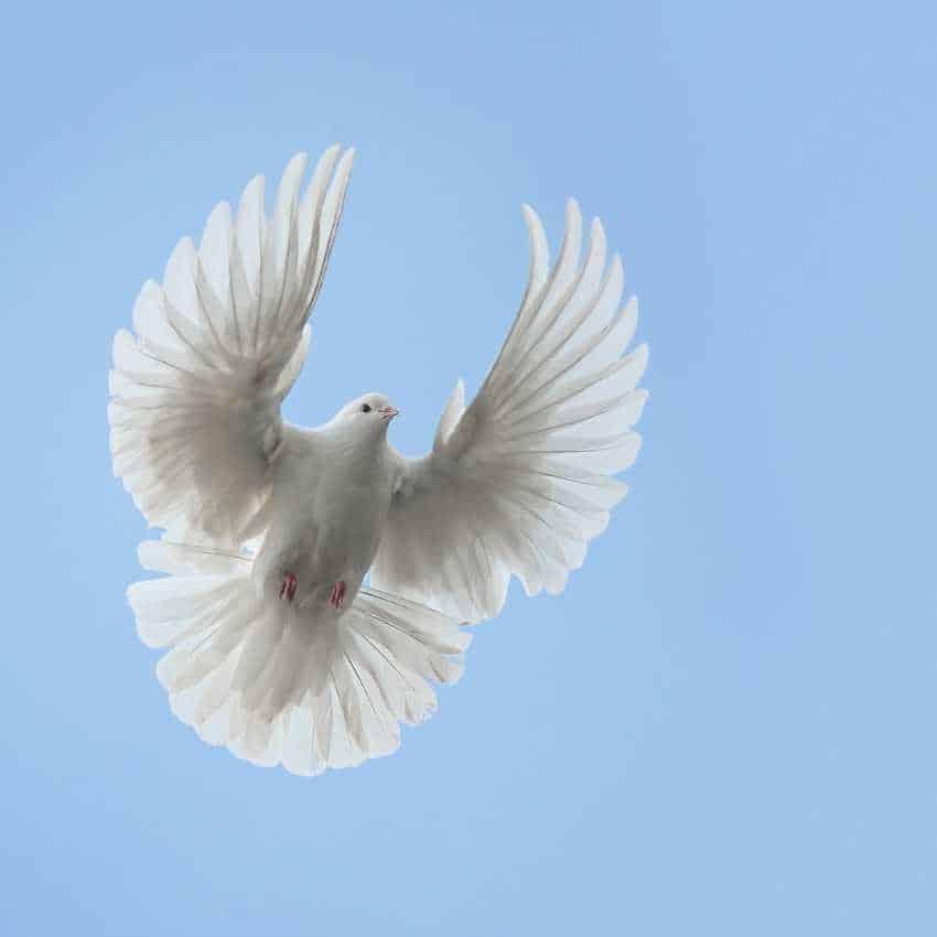 Dove represent hope