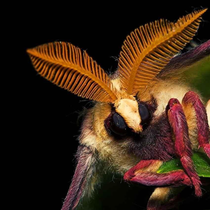 moth spiritual meaning