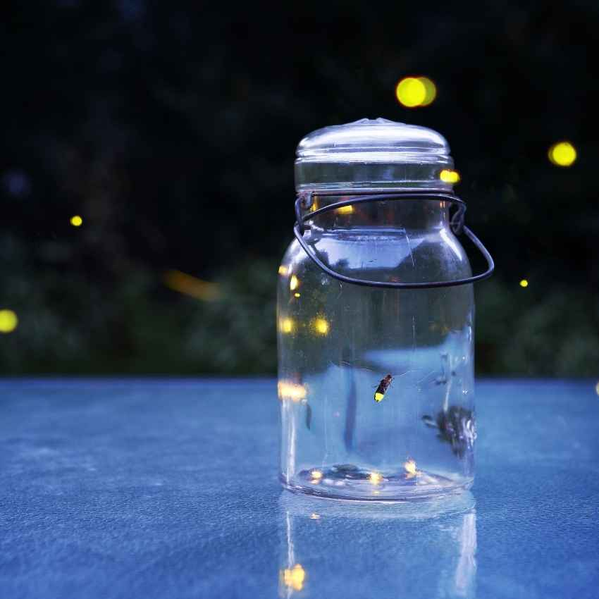 Firefly in house meaning