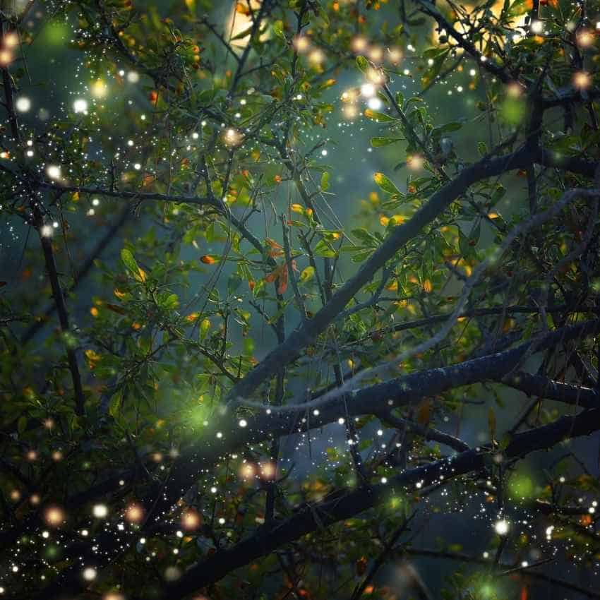 firefly meaning