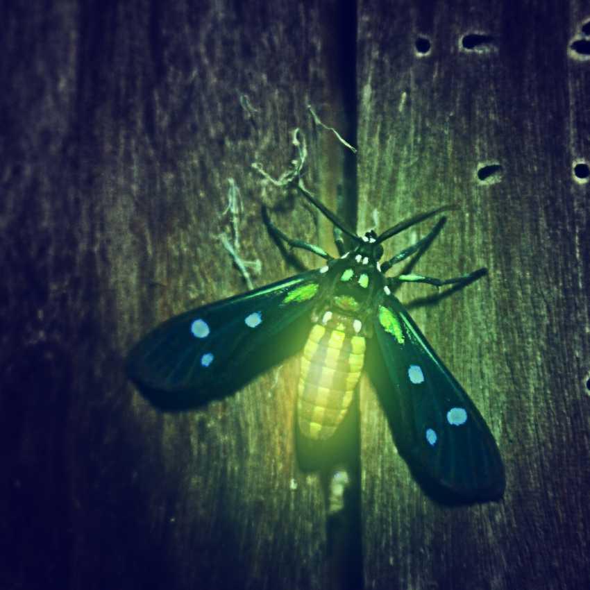 Firefly represent hope