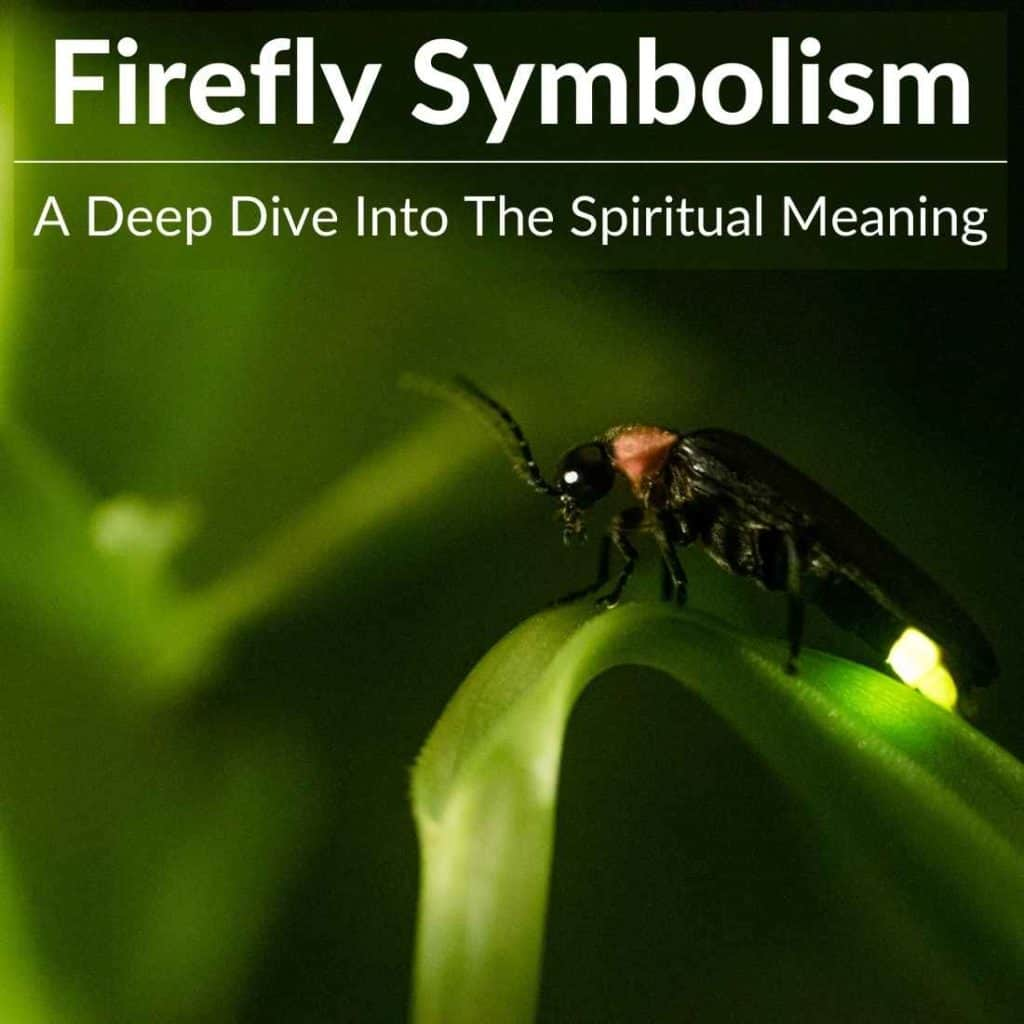 Firefly symbolism