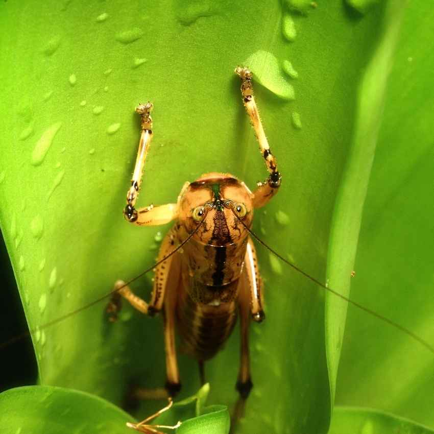 Grasshopper symbolism