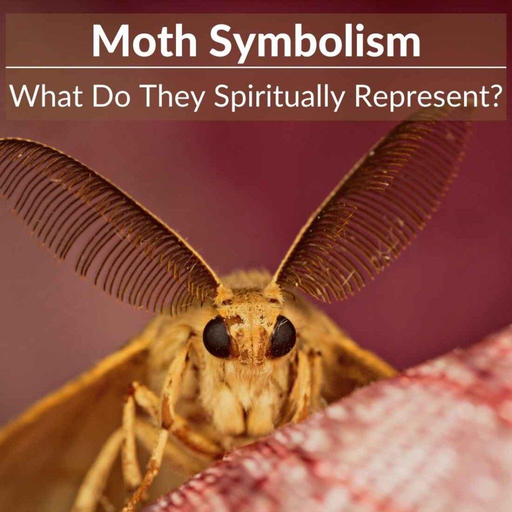 Moth symbolism