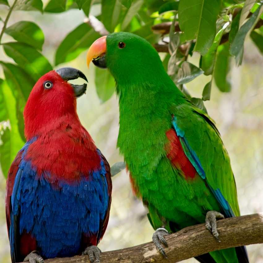 Parrot represent hope
