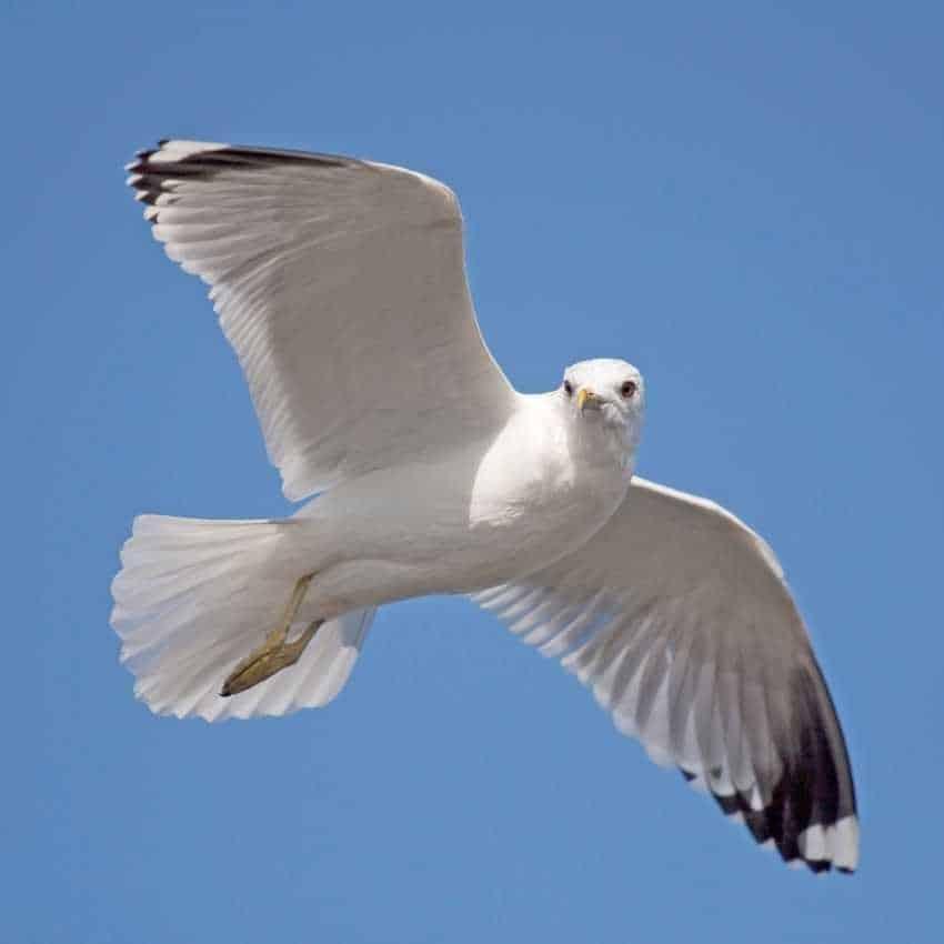 Seagull represent hope