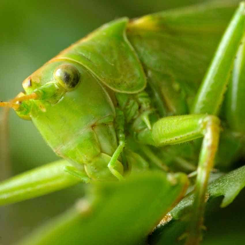 Seeing grasshoppers spiritual meaning