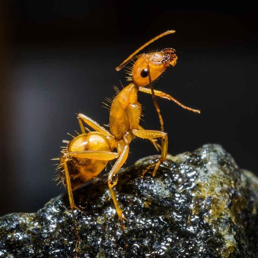 ant symbolism Native American culture