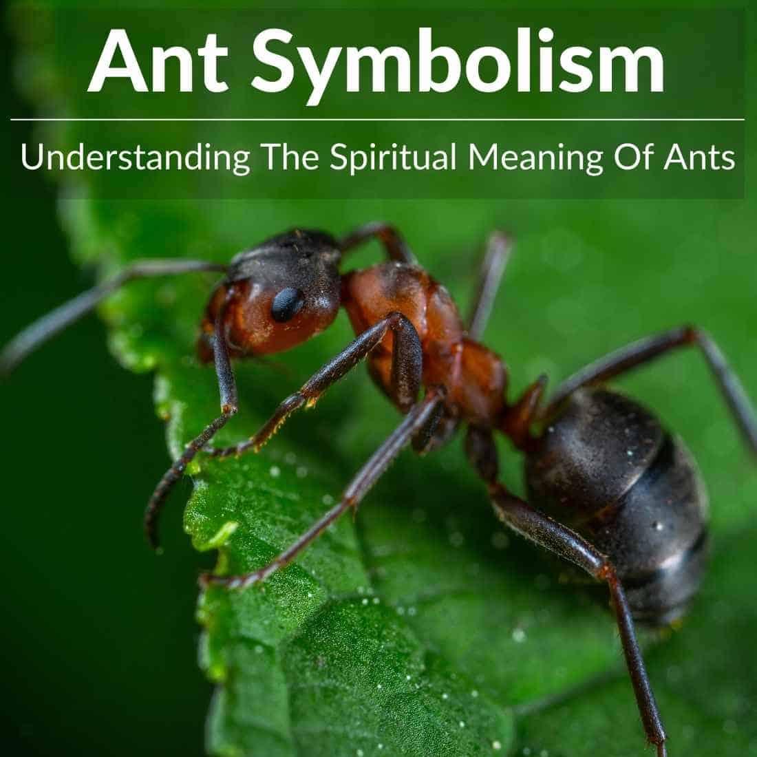 ant symbolism