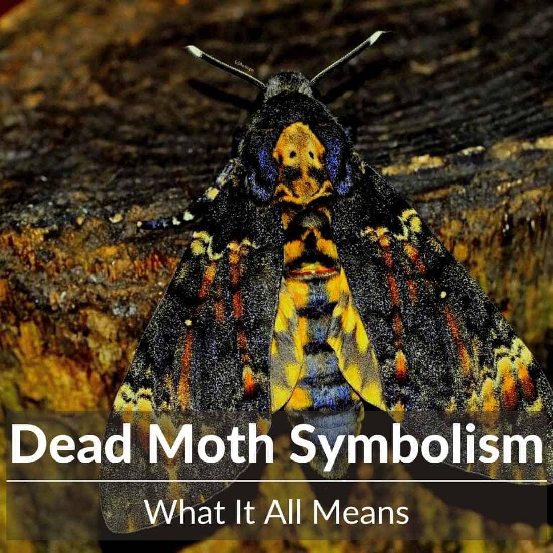 dead moth symbolism