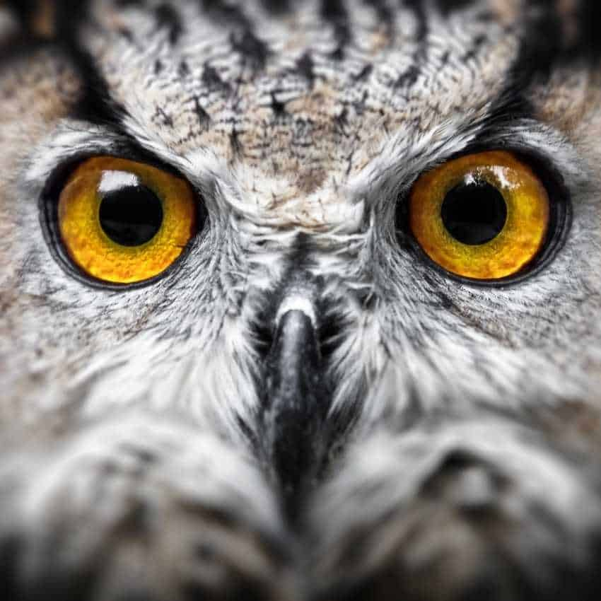 dead owl bad luck