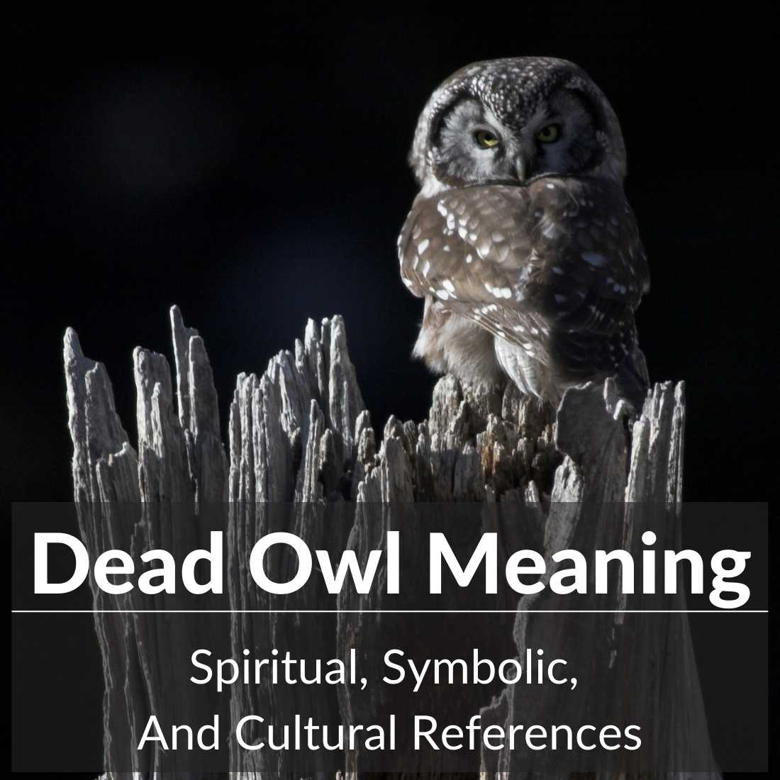dead owl meaning