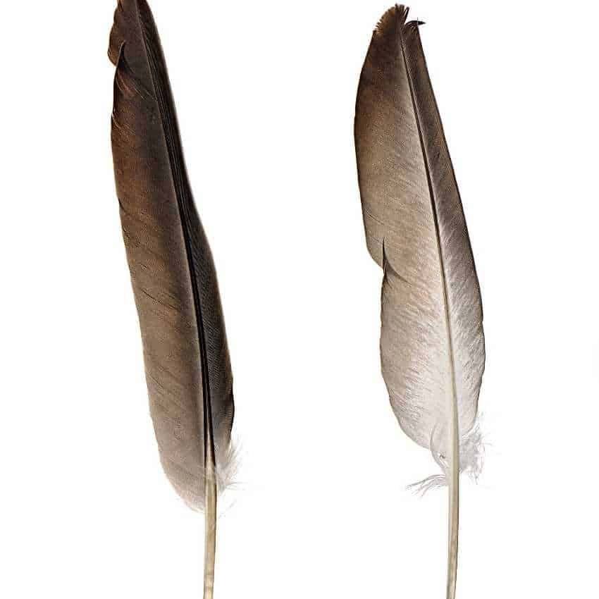 feather Spiritual meaning