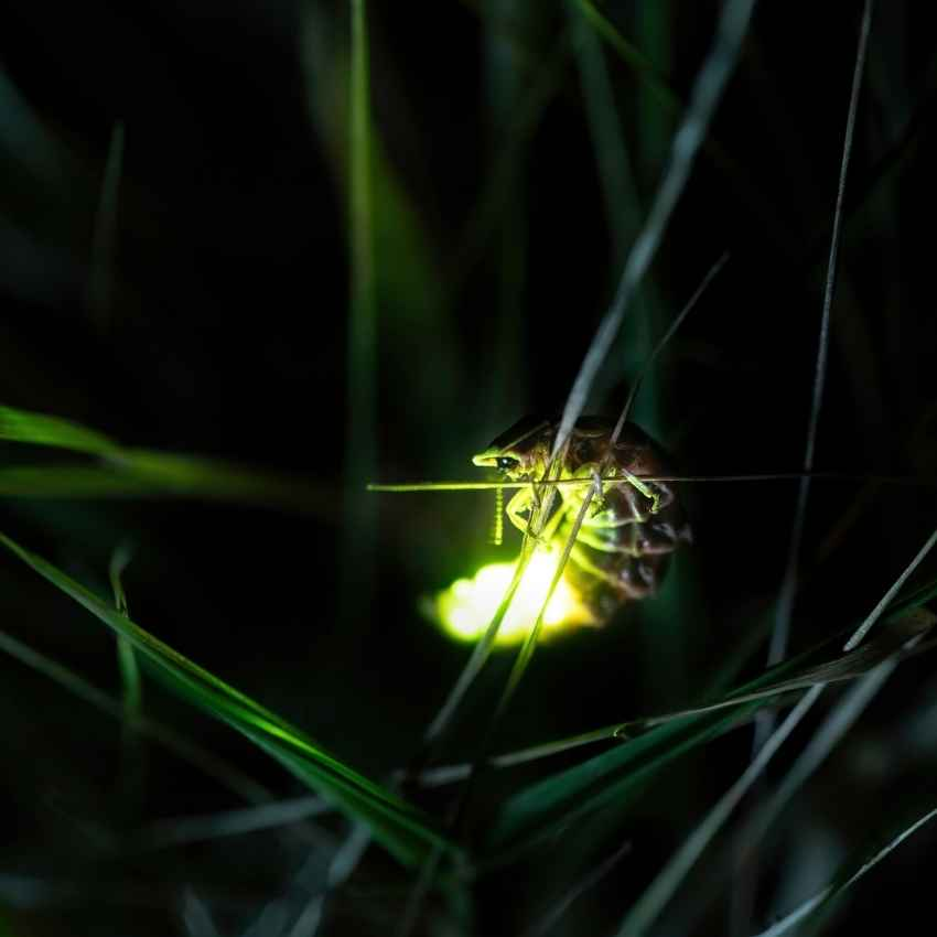 firefly spiritual meaning