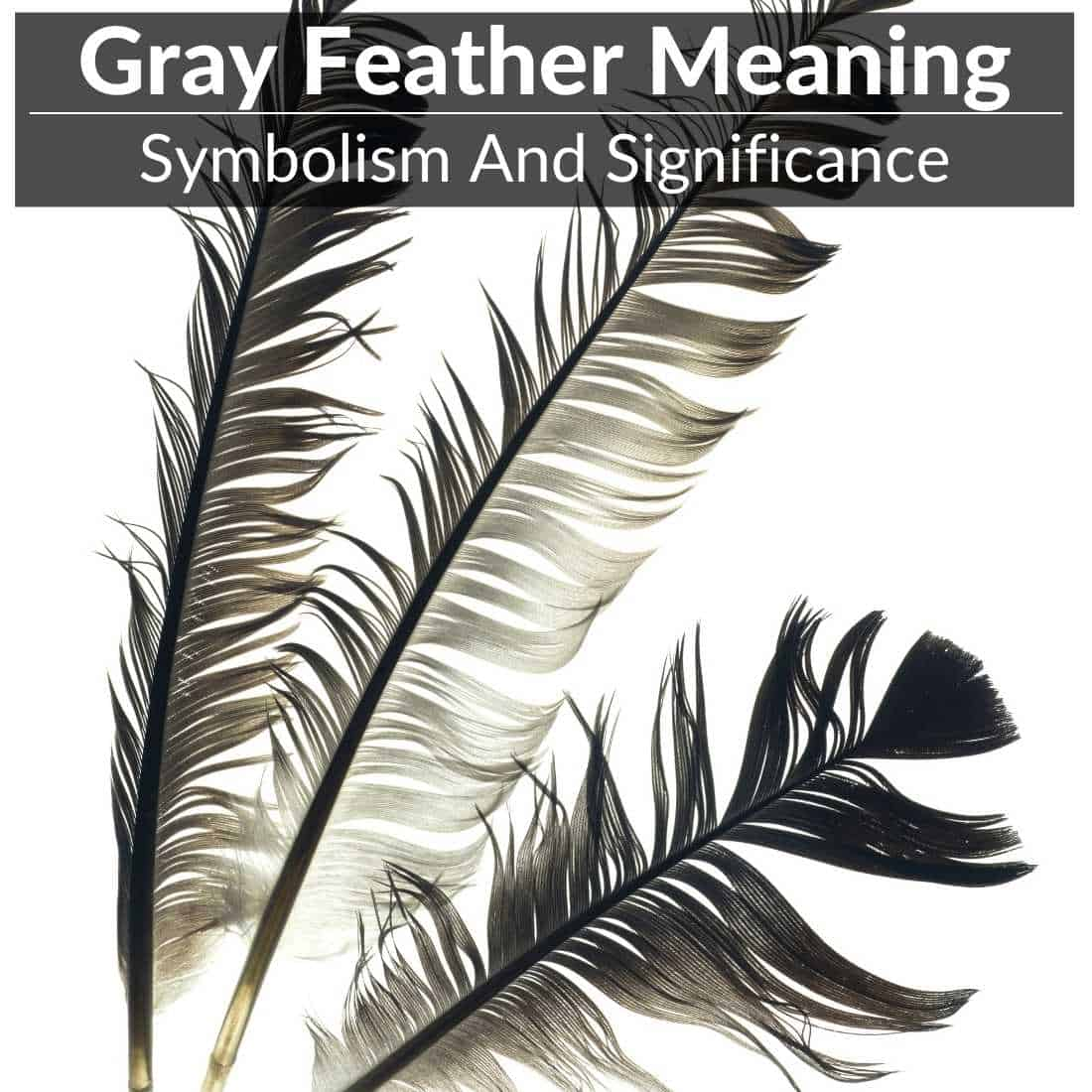 gray feather meaning