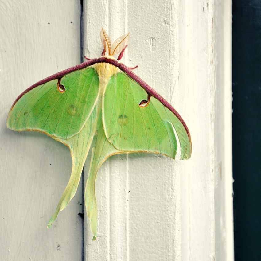 what do moths symbolize