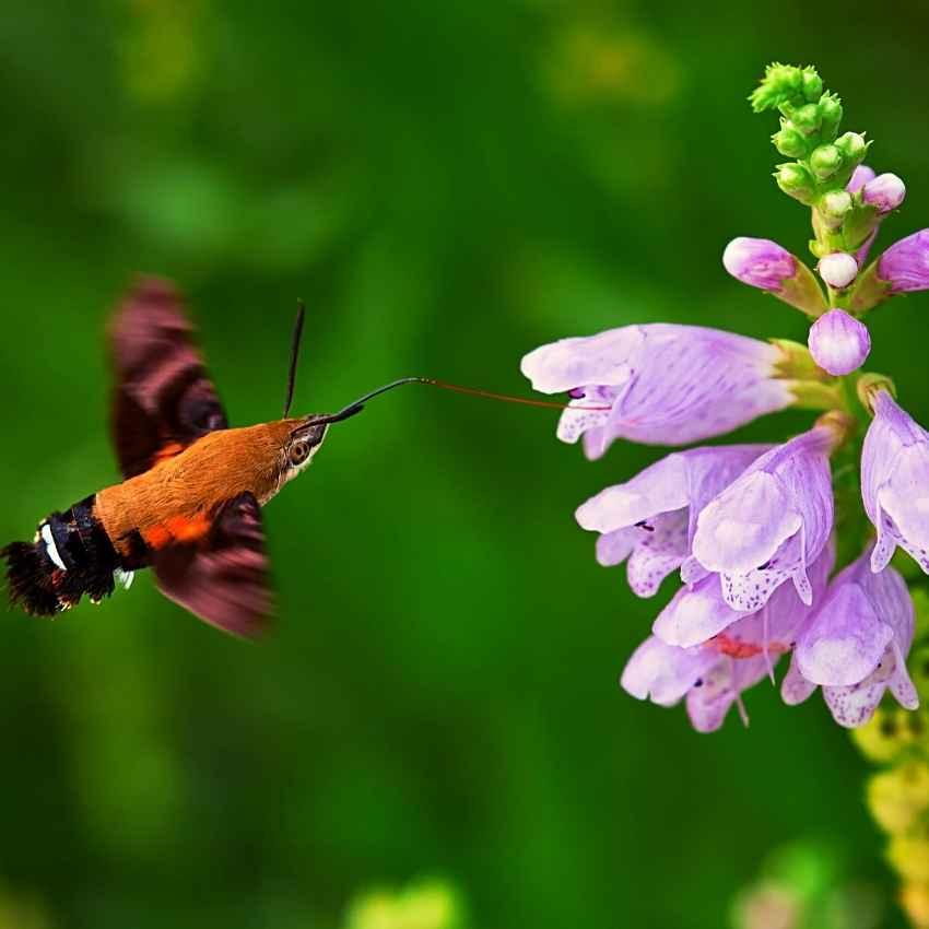 moth Animal totem