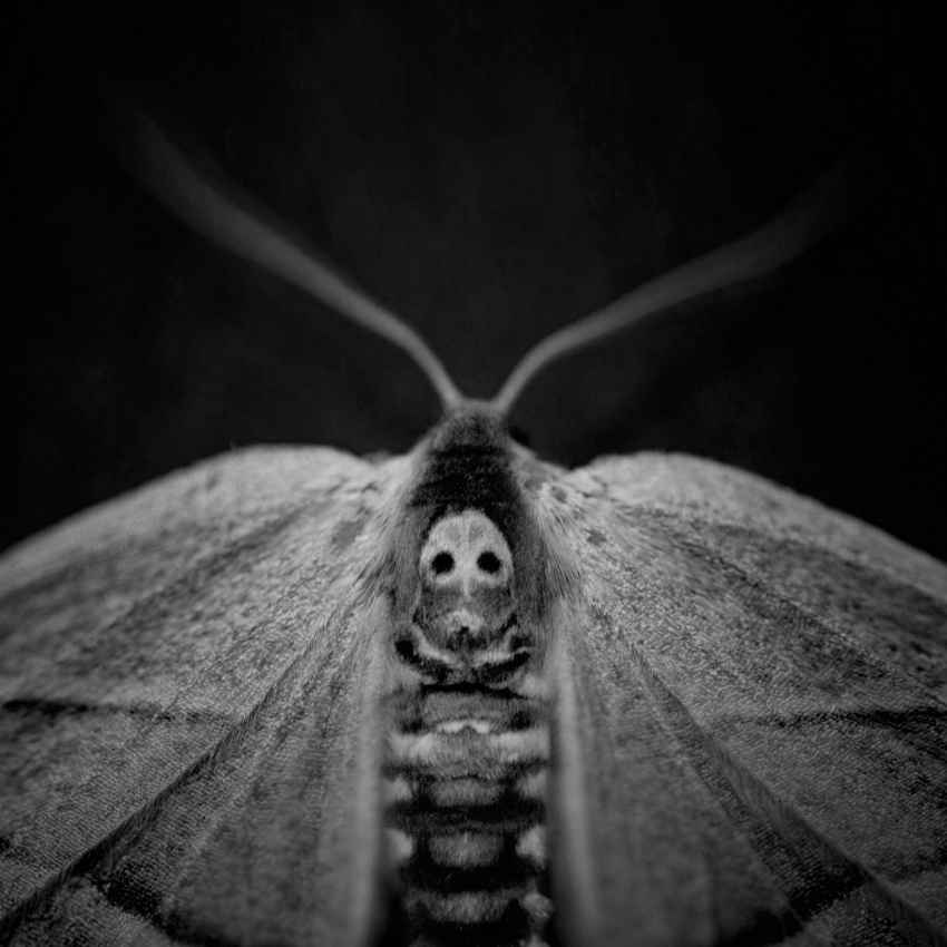 moth meaning death