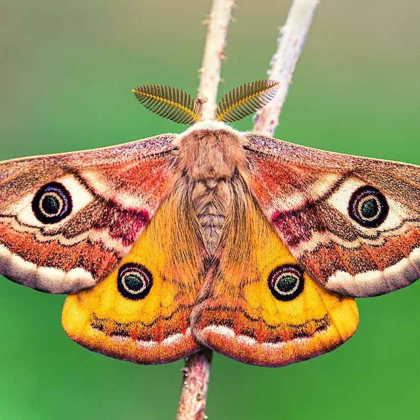 moth spirit animal