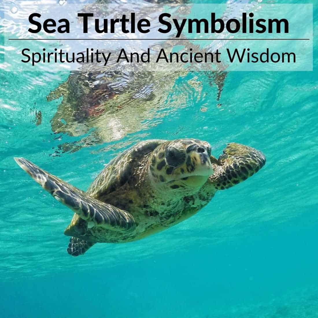 sea turtle symbolism
