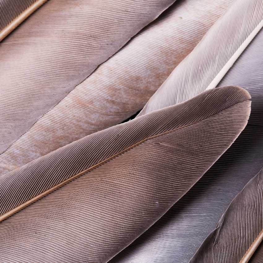 several gray feathers