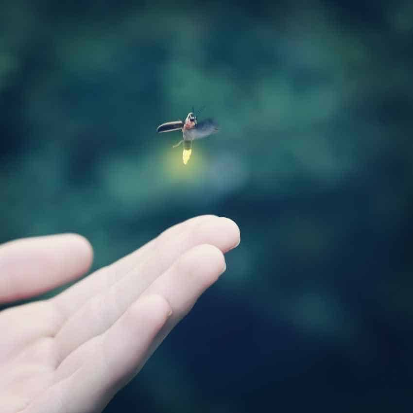 what do fireflies symbolize