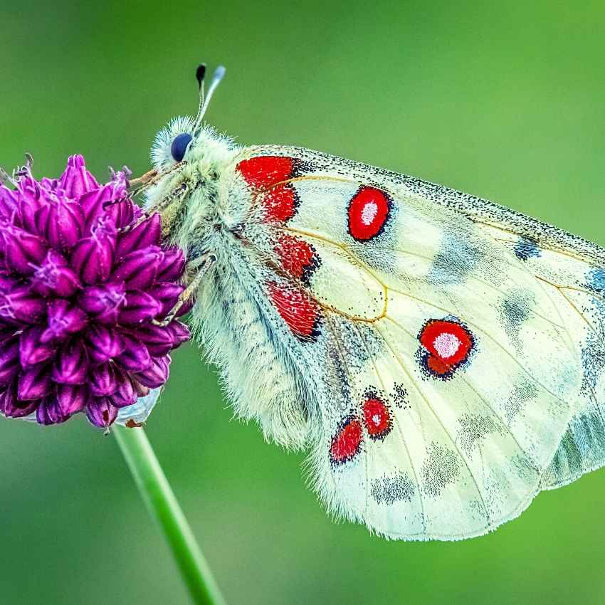 white moth meaning