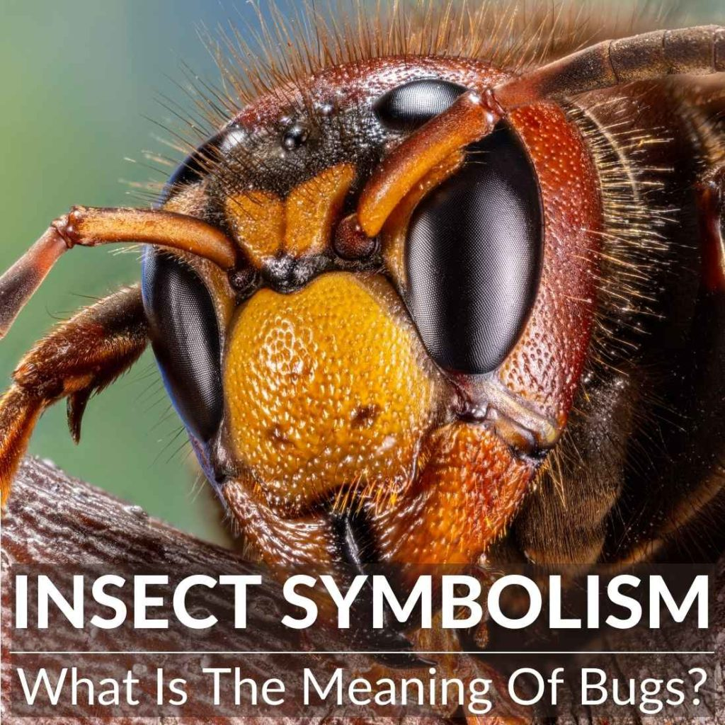 Insect Symbolism