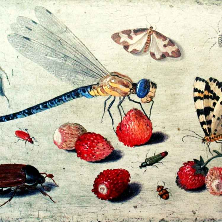 Insects in Arts