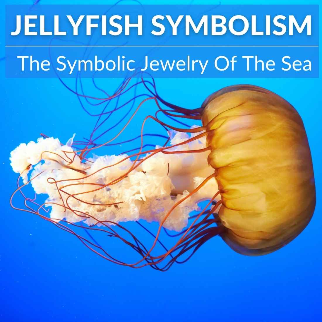 Jellyfish symbolism